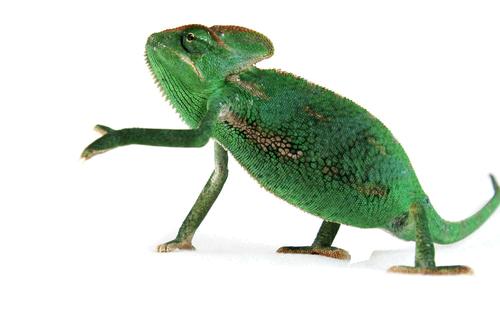 Kleintierpraxis Greiner, Neu-Ulm / Pfuhl –Reptilien