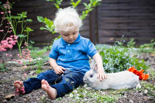 Kleintierpraxis Greiner, Neu-Ulm / Pfuhl –Schutzimpfungen Kaninchen