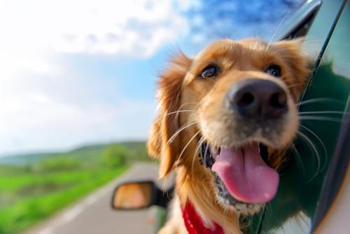Kleintierpraxis Greiner, Neu-Ulm / Pfuhl –Reisebestimmungen Haustiere