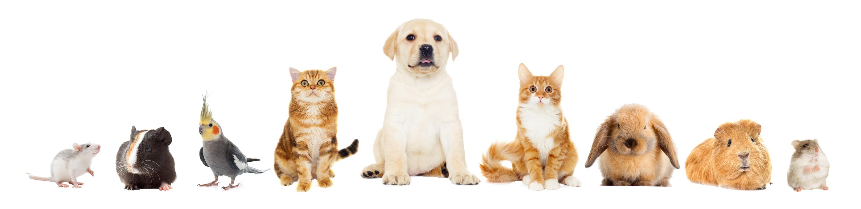 Kleintierpraxis Greiner, Neu-Ulm / Pfuhl –Kleintiere, Hund, Katze, Hase, Meerschweinchen